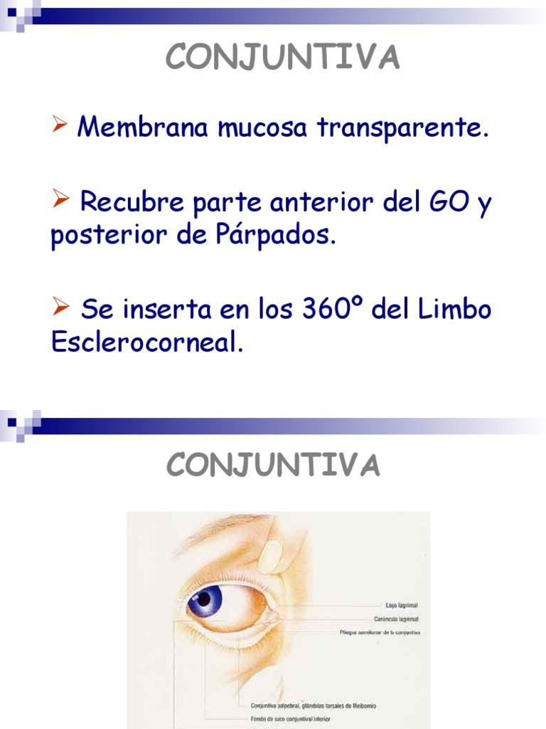 Anatomía y Fisiología de Conjuntiva