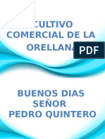 Hongos Orellana