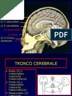 5-tronco-cerebrale-110914111719-phpapp02.pdf