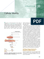 Ch 38 Cellular Motility