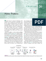Ch 36 Motor Proteins