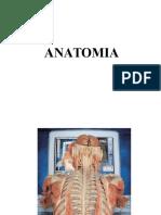 Anatomia 2013