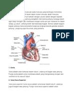 anatomi jantung.docx