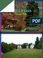 74861 Edelweiss