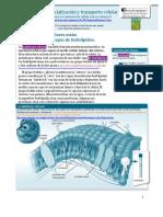 membranacelular-150111161609-conversion-gate02.pdf