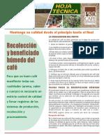 Hoja Recoleccion Y Beneficiado Húmedo Del Café