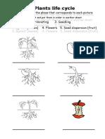 plants cycle worksheet