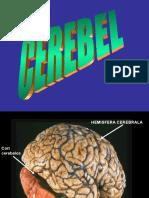 Cerebel-planse