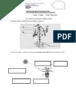prueba fotosisntesis 6° bascio