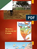 Historia y Evolución del caballo