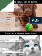 Protocolos de Vacunación