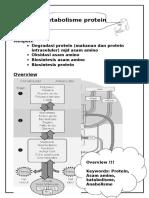 Metabolisme Protein Word