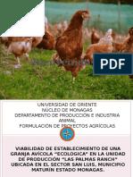 gallina ecologica presentacion.pptx