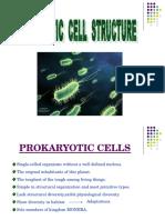 Prokaryotic Cell-1