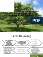 Efektifitas Ekstrak Daun Bintaro (Cerbera Odollam)