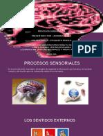 Exposicion procesos sensoriales.
