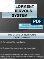 Development of Nervous System-hem