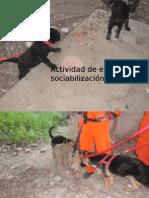 Actividad de Estimulacion y Sociabilizacion de Cachorros