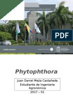 Exposición Phytophthora