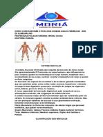 Curso Livre Anatomia e Fisiologia Humana Águas Vermelhas Muscular