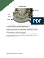 Akar Anggrek (Anatomi Tumb)