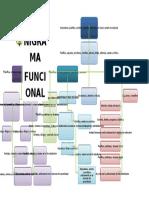 Organigrama Funcional 2017