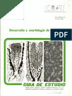 Desarrollo y Morfologia de La Semilla