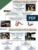 SECOIN Pilot Study on Perionyx Excavatus