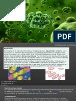 Bacterias Reproducción y Defensa