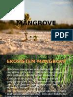 Mangrove Fidela n.