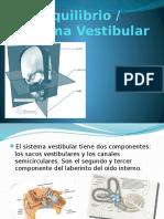 Sistema Vestibular (Fisiologia)