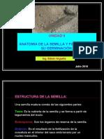 Anatomía de La Semilla