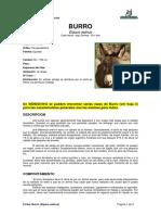 Ficha BURRO _Equus Asinus