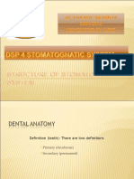 DSP 4 Stomatognatic System - Week 1 (Monday)