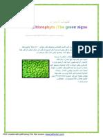 الطحالب الخضراء