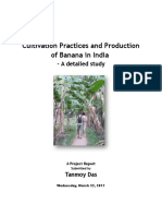 23124754-Project-Report-on-Banana.doc