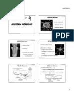 Anatomia Sistema Nervoso2