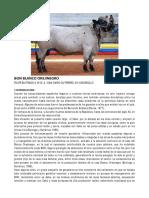 Bon Blanco Orejinegro