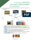 1.1-Diversidade-dos-animais-Forma-e-Revestimento-Ficha-Informativa.pdf
