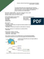 Resumen Sistema Nervioso embriologia