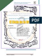 Bioquimica Ciclo de La Urea