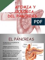 1fisiologiadelpancreas Micro 101031202228 Phpapp01