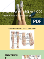 lower leg and foot