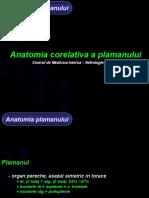 Anatomie Plaman