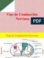 vasdeconduccinnerviosa-101115062052-phpapp02
