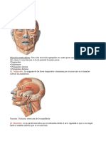 Anatomía Musculos