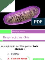 respiração aeróbia