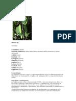 Abedul (Betula Sp)