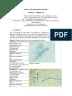Reporte de Microbiologia No.1 (1)