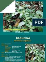 Barucina